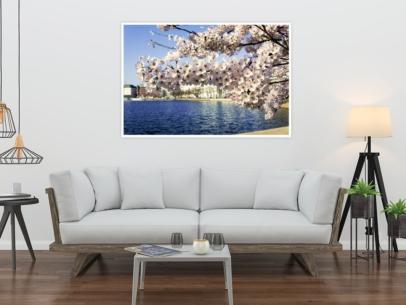 Hamburg Foto - ALS-00004 Kirschblüte an der Binnenalster Wandbild hell