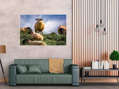 KUD-00002 - Kuddelmuddel - Schafe im Alten Land Wandbild dunkel