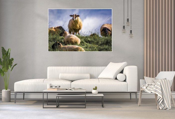 KUD-00002 - Kuddelmuddel - Schafe im Alten Land Wandbild hell