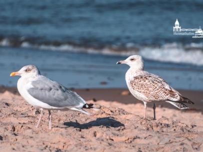 MAR-00011 - Maritimes - Möwen an der Ostsee