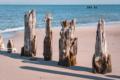MAR-00013 - Maritimes - Alte Pfähle an der Ostsee