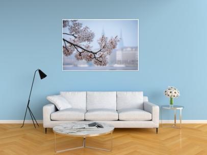 Hamburg Fotos und Bilder - Alster - ALS-00008 Kirschblüte an der Binnenalster Wandbild