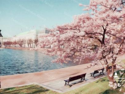 Hamburg Fotos und Bilder - Alster - ALS-00010 Kirschblüte an der Binnenalster Wandbild
