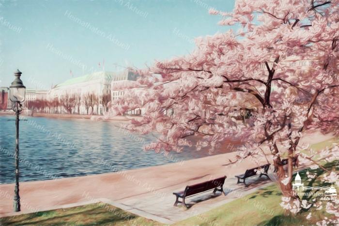 ALS-00010 Kirschblüte an der Binnenalster Wandbild