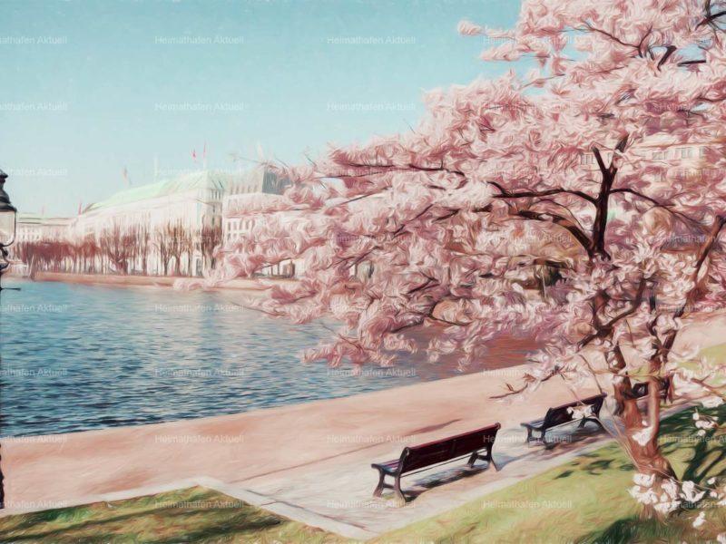 Hamburg abstrakt - ALS-00010-Kirschblüte-an-der-Binnenalster