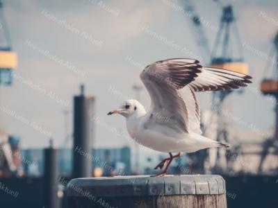 Hamburg Foto - HAF-00035 Möwe auf einem Poller im Hamburger Hafen