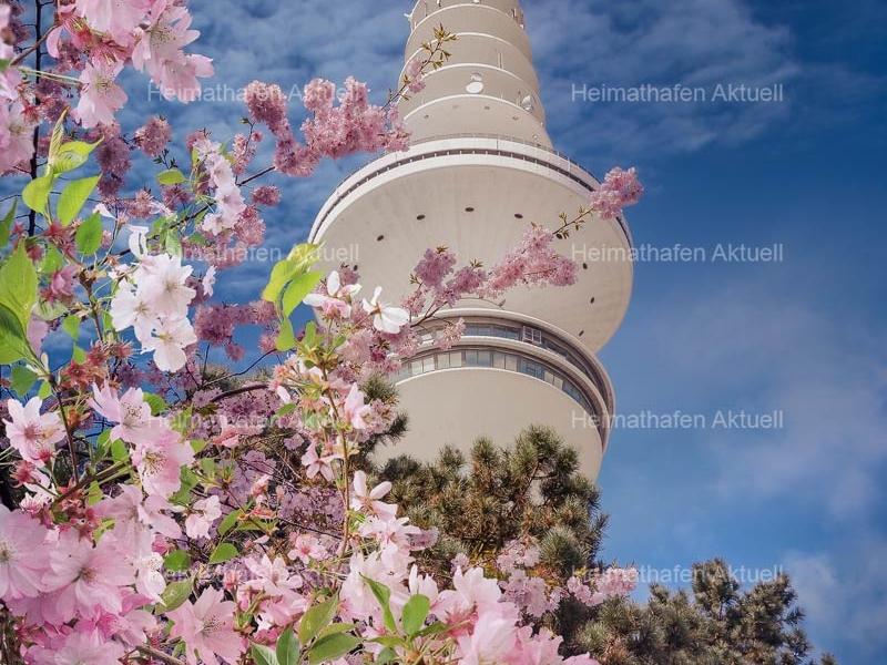 Hamburg-Fotos-HAL-00067-Kirschblüte am Fernsehturm